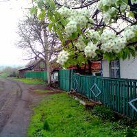 пригородная, Горское