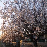 Весна в Кировске, Кировск