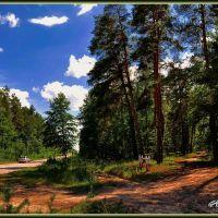 Лесной пейзаж, Кременная