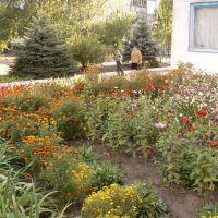 """Во дворе школы-сада """"Журавушка"""", Лутугино"""