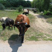 Wild animals, Лутугино