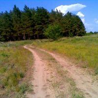 Дорога с речки в грибной лесок, Новоайдар