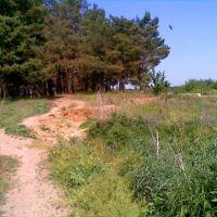 Тропинка в грибной лес и птица над ним, Новоайдар