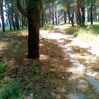 грибной лес, Новоайдар