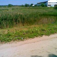 болото, Новоайдар