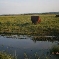 пейзаж с коровками, Новоайдар