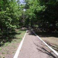 дорожка от ст.Центральный Парк к остановке, Свердловск