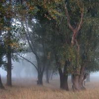 лес, Славяносербск
