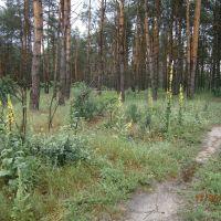 по дороге домой ,пейзаж с утренним влажным лесом после дождя, Станично-Луганское