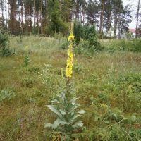 мокрые травы, Станично-Луганское
