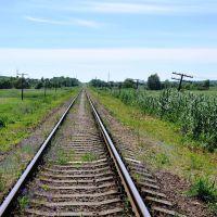 790 км Валуйки-Должанская, Троицкое