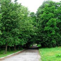 Старый парк на территории Бродовского замка, Броды