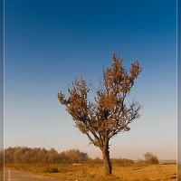 Кінець сезону, Жидачов