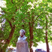 Бюст А. С. Пушкину в сквере перед кинотеатром., Каменка-Бугская