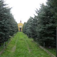Старий мостиський цвинтар. Головна алея., Мостиска