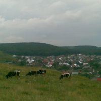 :))), Николаев