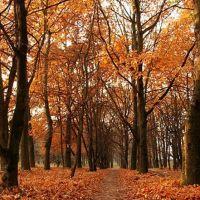 Autumn, Николаев