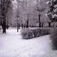 Міський парк. Зима, Рава Русская