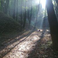 дорога в лісі, Рава Русская