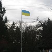 Прапор буля Будинку Культури, Радехов