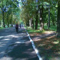 Поспект Відродження через парк, Радехов