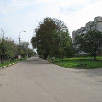 вул. В.Стуса (Сокаль, Україна), Сокаль