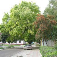 вул.Мицкевича (Сокаль, Україна), Сокаль