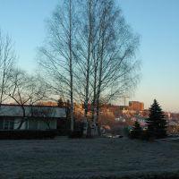 Birch trees. Берёзы., Трускавец