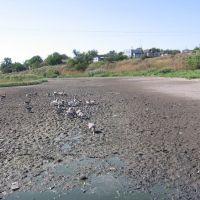 Засуха, Арбузинка