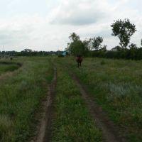 Полевая дорога, Баштанка