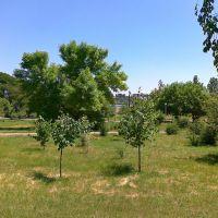 Парк в Баштанке, лето 2010, Баштанка