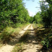 дорога до млина, Великая Корениха