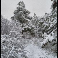 Доманевка. Сосны в снегу., Доманевка