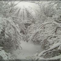Доманевка. Пейзаж в лесу., Доманевка
