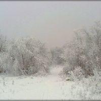Зима. В лесу., Доманевка