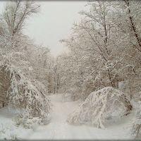 Зима. Деревья в снегу., Доманевка