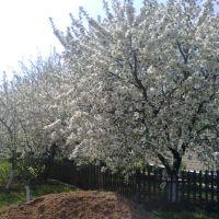 Вишневый сад, Еланец