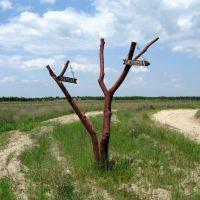 Дорожный указатель/Waymark, Кривое Озеро