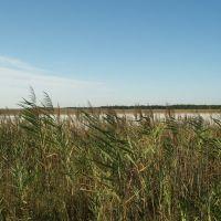 одно из высохших озёр, Кривое Озеро