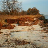 Берег моря после шторма, Кривое Озеро