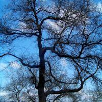 Дерево..., Николаев
