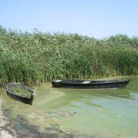 reeds, Аккерман
