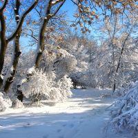 Зимний парк Мира. Peace Park in the winter., Аккерман