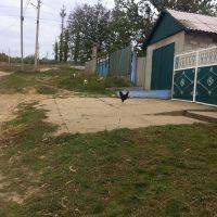 Разновидность домашнего хозяства, Березовка