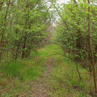 ліс, Березовка
