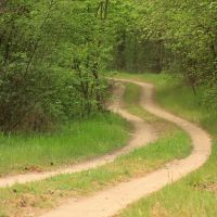лісова дорога, Березовка