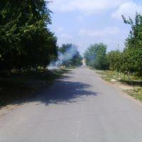 Дорога, Березовка