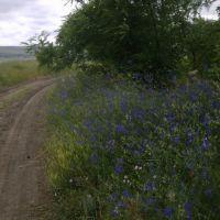 в поле июнь 2010, Бородино