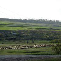 Вигляд при в'їзді в село Рівне (02.05.2007 р.), Бородино