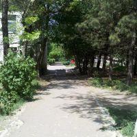Аллея к д.28, Великодолининское